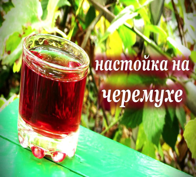 Чай своими руками из черёмуха 29