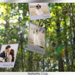 Проекты - VideoHive - Photo Memories on Trees [AEP]